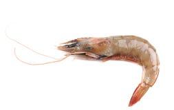 Close up of fresh shrimp. Stock Photo
