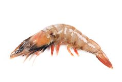 Close up of fresh shrimp. Royalty Free Stock Images