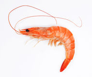 Close up of fresh shrimp Stock Images