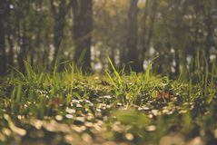 Close up of fresh spring grass back-lit by sun stock images