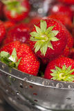 Close-up fresh strawberries in a stainless steel colander. Close up of red harvest fresh strawberries in a colander stainless steel Stock Images