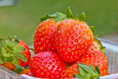 Close up of fresh strawberries on the table and inside plastic b Royalty Free Stock Photos