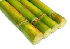Close up of fresh sugar cane Stock Photography