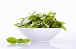 Close up fresh tea leaves in white bowl Royalty Free Stock Images