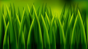 Close up of fresh thick grass Royalty Free Stock Images