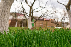 Close up of fresh thick grass Royalty Free Stock Image