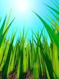 Close up of fresh thick grass Stock Photos