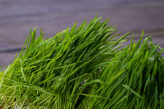 Close up of fresh thick grass. Stock Image