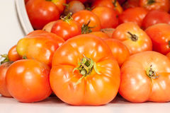 Close Up of Fresh Tomatoes. A studio front close-up view of a freshly picked field tomatoes fallen out of its bucket Royalty Free Stock Photos