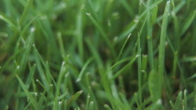 Close Up Of Fresh Trimmed Thick Grass stock footage