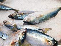 Close up fresh tuna seafood scene royalty free stock photography