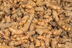 Close up fresh turmeric root (Yellow Root Zedoary, Curcuma longa Stock Photo