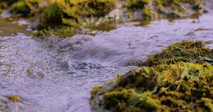 Close-up of fresh water stream from a glacier at Svalbard stock video