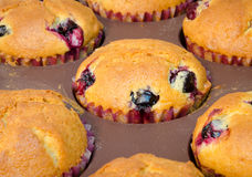 Close-up of freshly baked muffins in a form. Freshly baked lemon muffins in the baking form Stock Images