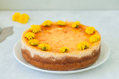 Close up of freshly baked new york styled cheesecake with dandelion honey garnished with flowers stock images