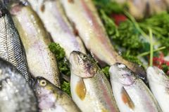 A close-up of freshly caught Rainbow Trout on ice on a market st stock photography