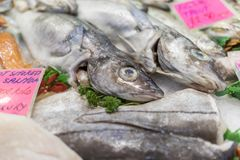 A close-up of freshly caught Rainbow Trout on ice on a market st. A close-up of freshly caught Trout with parsley on ice on a market stall in the UK stock photography