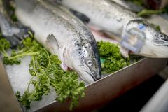 A close-up of freshly caught Rainbow Trout on ice on a market st stock photo