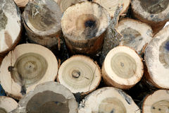 Close up of freshly cut logs Royalty Free Stock Photo