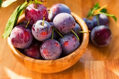 Fresh cherry plums in wooden bowl close. Close up freshly picked cherry plums in wooden bowl. Selective focus. Healthy vegetarian summer diet royalty free stock photo