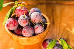 Fresh cherry plums in wooden bowl close. Close up freshly picked cherry plums in wooden bowl. Selective focus. Healthy vegetarian summer diet stock images