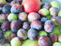 Close up of freshly picked damsons in water stock photo