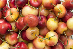 Close up of freshly picked rainier cherry Royalty Free Stock Photography