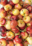 Close up of freshly picked rainier cherry royalty free stock photos