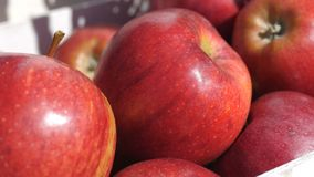 Close up of freshly picked red fiji apples , graded and packaged. 4k stock footage
