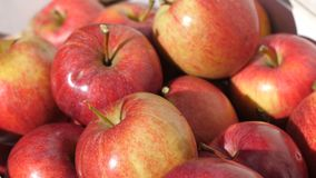 Close up of freshly picked red fiji apples , graded and packaged. 4k stock video footage