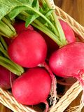 Close-up of freshly picked and washed radish. With green tops Royalty Free Stock Photography