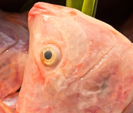 Close up freshness reddens the Nile Tilapia fish (Oreochromis ni Stock Photos