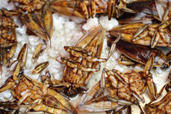 Close up of fried insect Stock Images