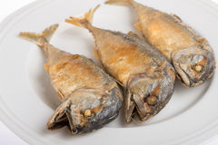 Close up fried mackerel. On white background Stock Photography