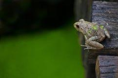 Close up frog on the bridge Stock Photos
