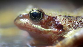 Close up of a Frog Stock Image