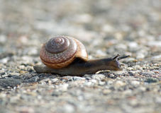 Close-up From A Snail Royalty Free Stock Photo