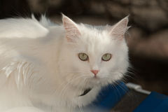 Close up front view of cat on tile roof Royalty Free Stock Photos