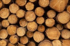 A front on view of a pile of freshly cut trees striped of branches and prepared for the saw mill part of the logging industry in royalty free stock image