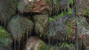 Close-up frontal view of water dripping on mossy stones.