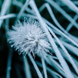 Close-up of frost on plant and grass Stock Photo