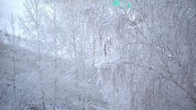 Close up of frosty tree`s branch after heavy snowfall. Background tree in frost in winter, road, bus. snowing on tree. Snowing on tree branches. Close up of stock video footage