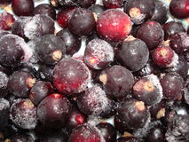 Close up of frozen mixed fruit. Berries - red currant, cranberry, raspberry, blackberry, bilberry, blueberry, black currant Stock Images