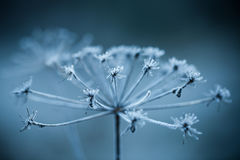 Close up of frozen plant Royalty Free Stock Image