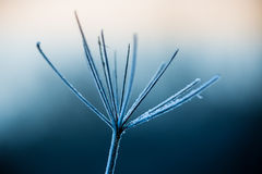 Close up of frozen plant Stock Images
