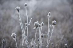Close up of frozen stems. Selective focus Stock Image
