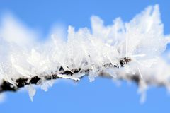 Close-up of Frozen Tree Branch Against Blue Sky Royalty Free Stock Images