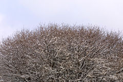 Close-up frozen trees Stock Images