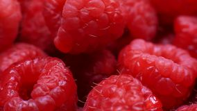 Close up of fresh raspberries stock footage