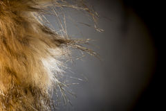 Close up of Fur Coat Royalty Free Stock Image